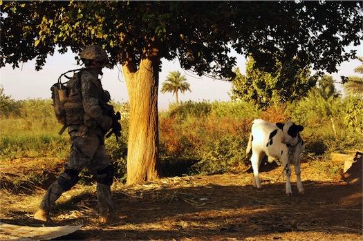 cow%201.jpg